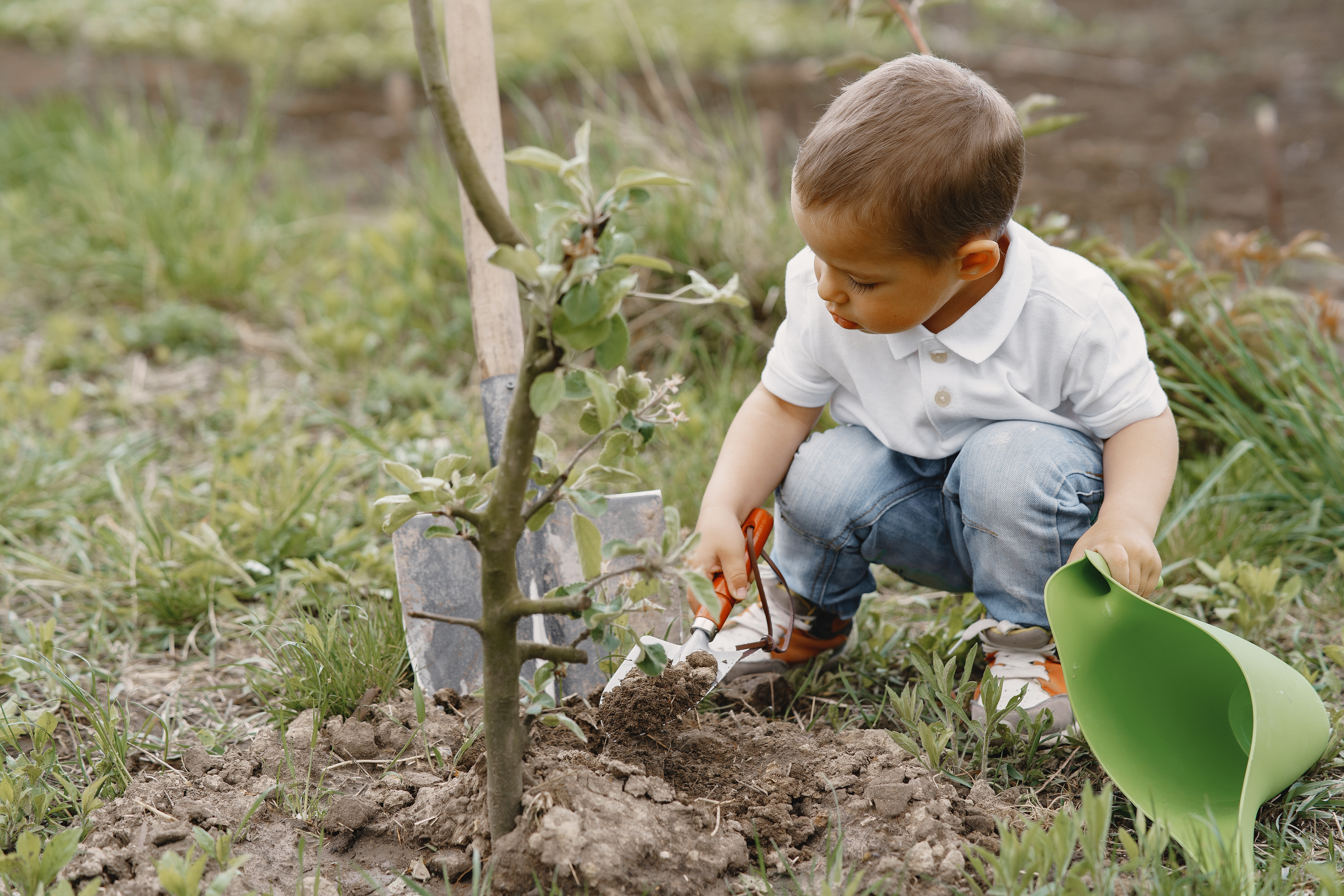 Child on a yard. Kid planting a tree. Boy with a blue funnel.